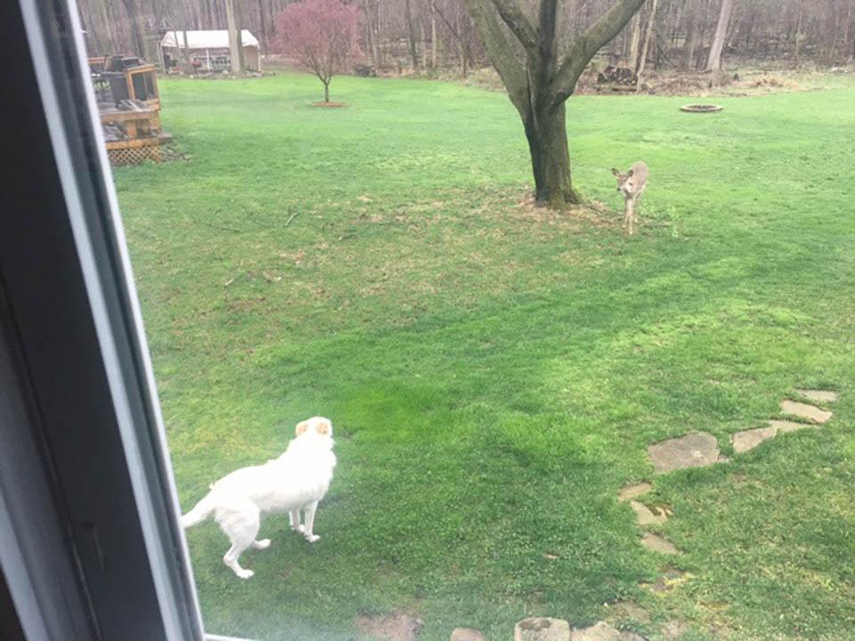 Buddy y ciervo