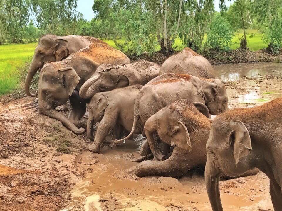 Cientos de elefantes África