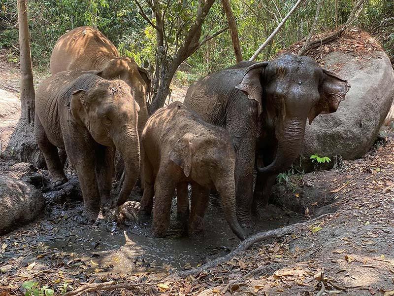 Cientos de elefantes en delta