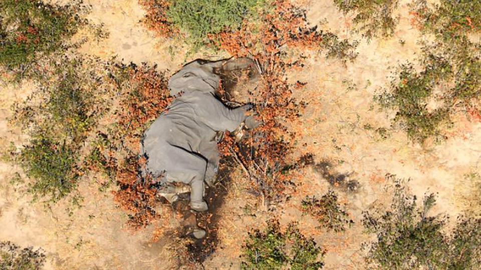 Cientos de elefantes muertos Botswana