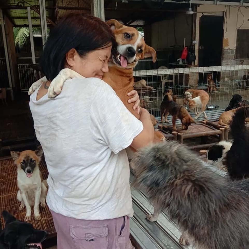 Doctora en Indonesia rescata perros