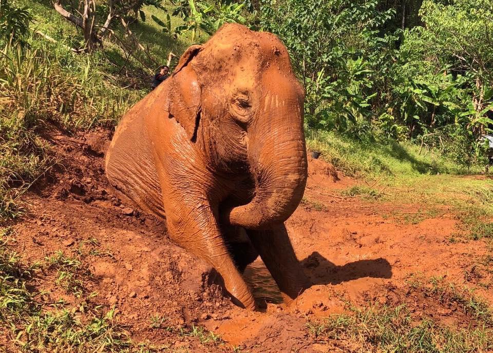 Elefante en refugio