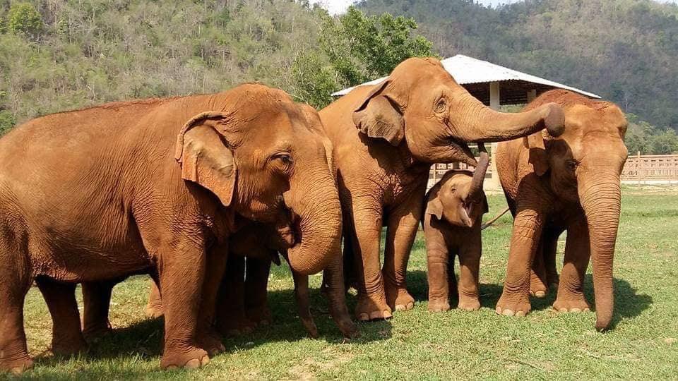 Elefantes compartiendo