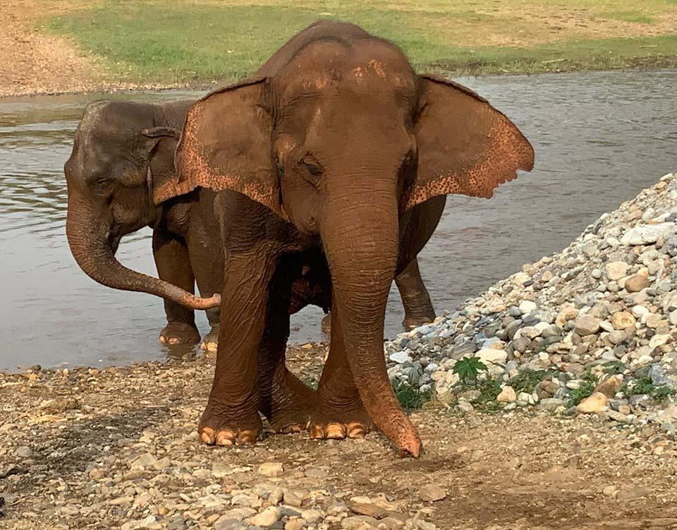Animales tomando agua