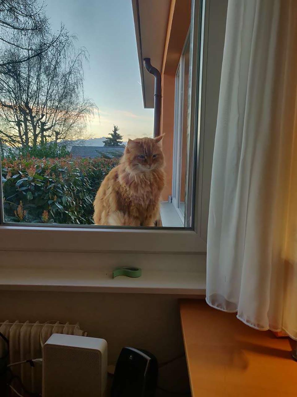 Gato corre a casa de vecinos