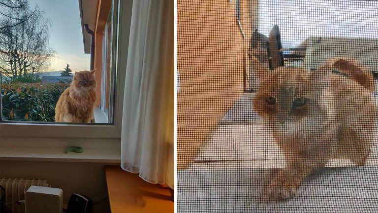 Gato corre para decir «buenos días» cada vez que sus vecinos abren las persianas