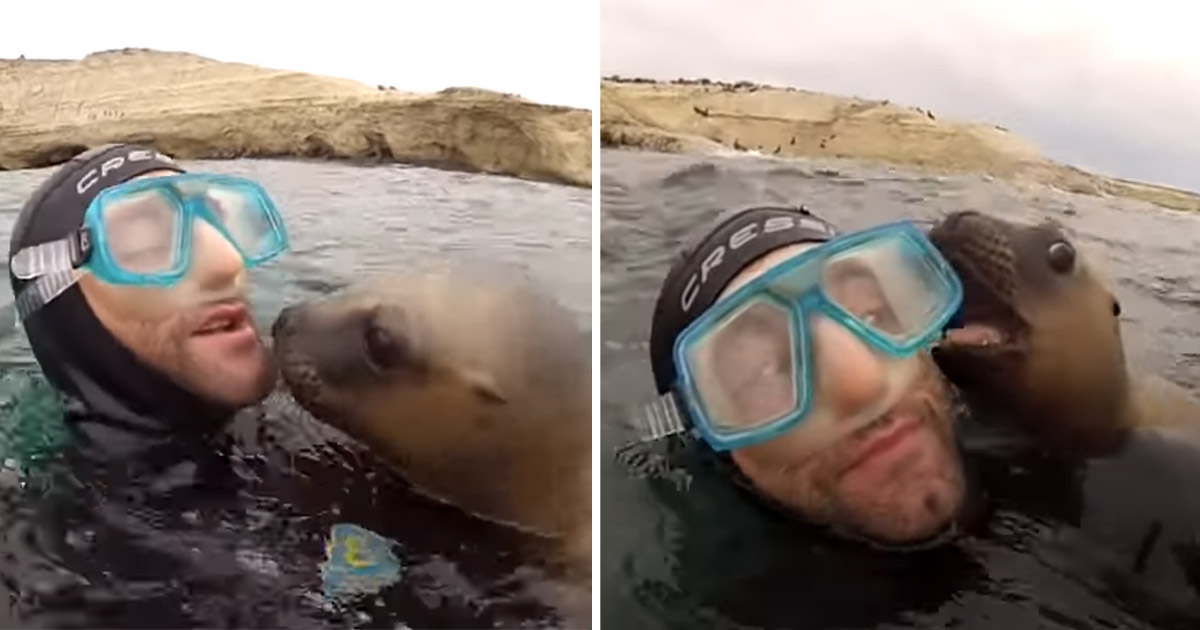 Leones marinos sorprenden buzos
