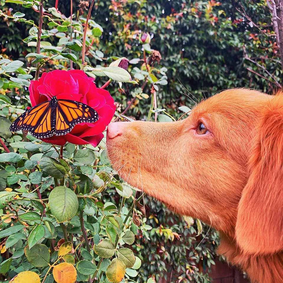 Mariposas en su jardín