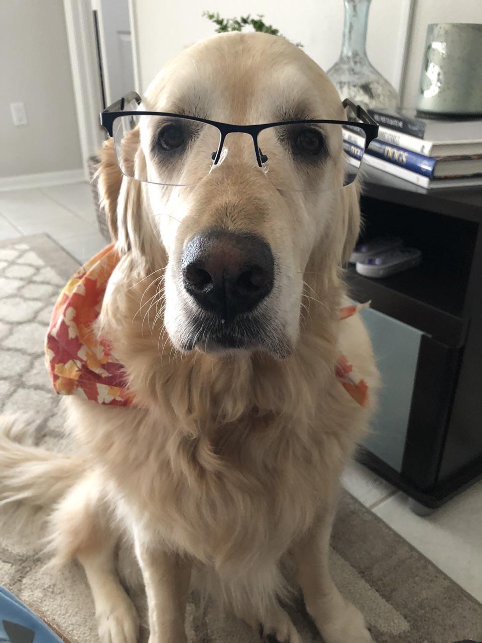 Perrita con gafas