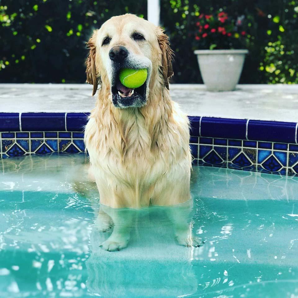 Perrita en la piscina