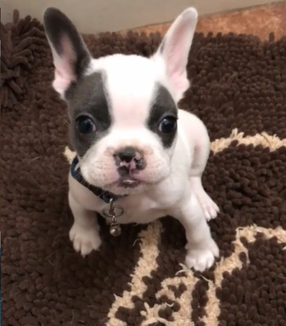 Perrito llamado Po