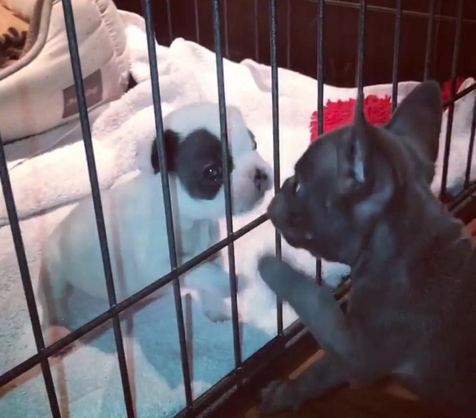 Perritos juegan entre jaula