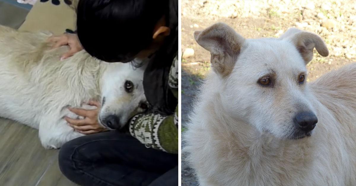 Perro con cáncer quería ser abrazado luego de ser rescatado