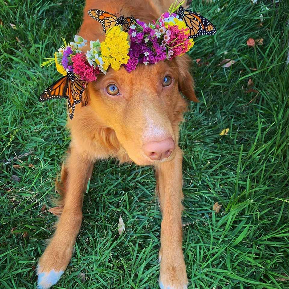 Perro con corona de flores y mariposas