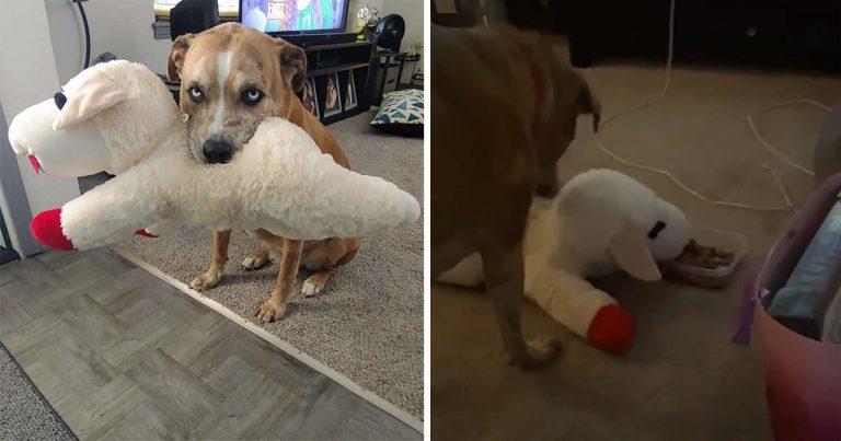 Perro siempre se asegura de compartir su comida con su juguete favorito