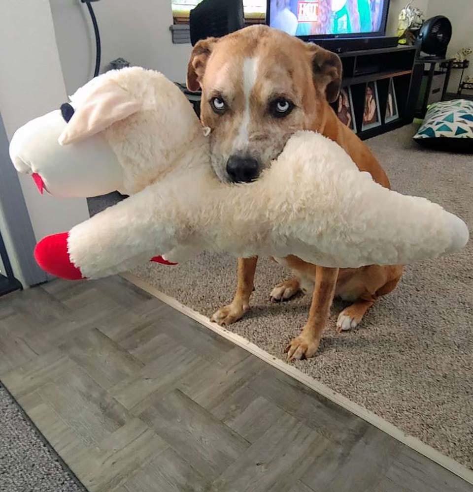 Perro y su cordero favorito