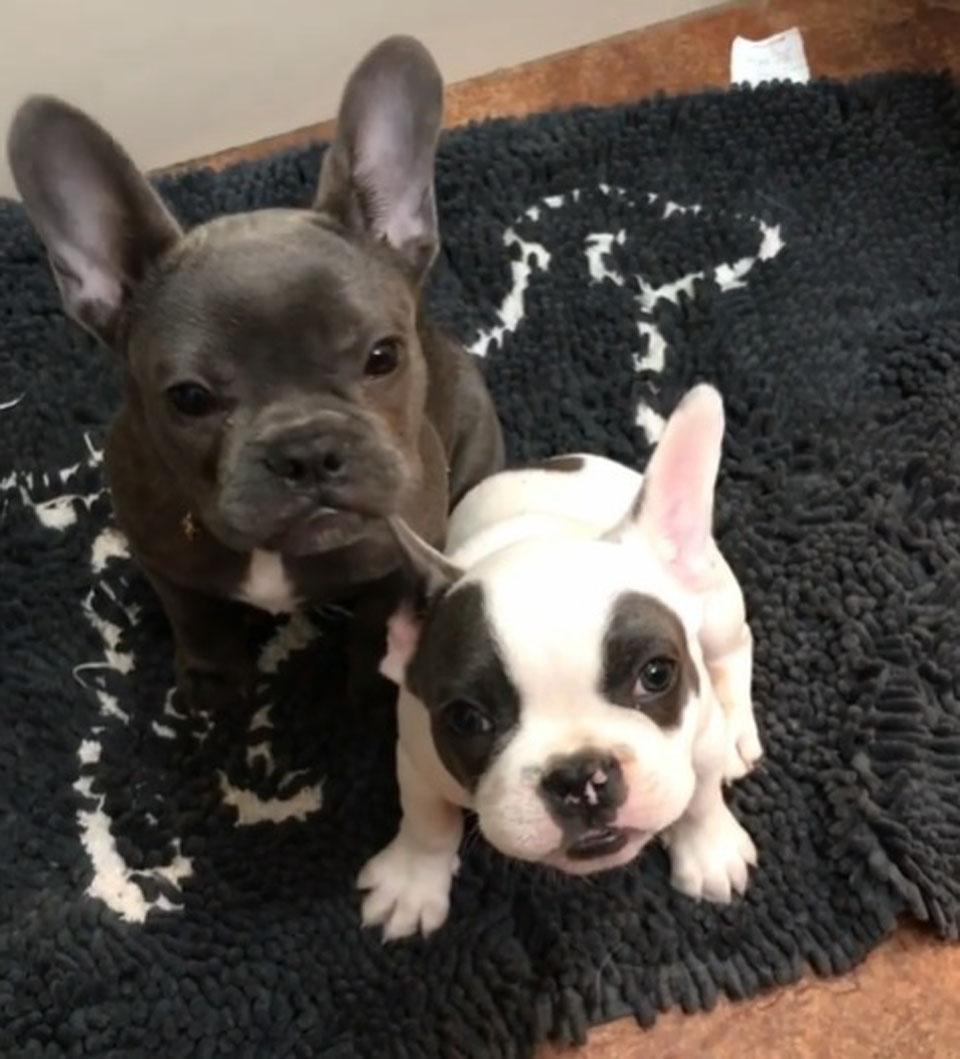 Perros hermanitos