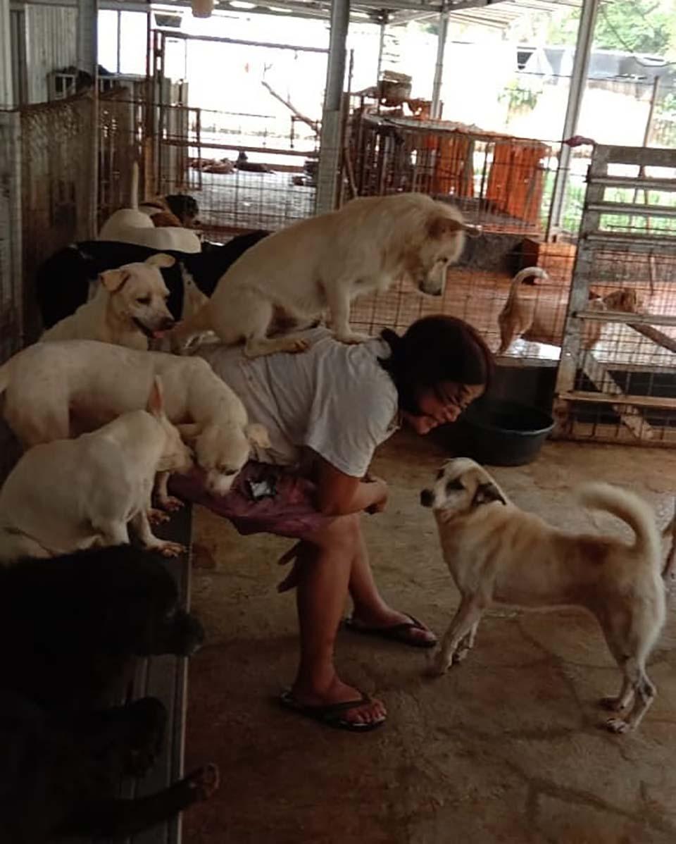 Refugio de mascotas
