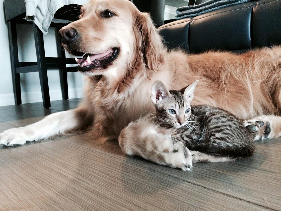 familia adopta perro