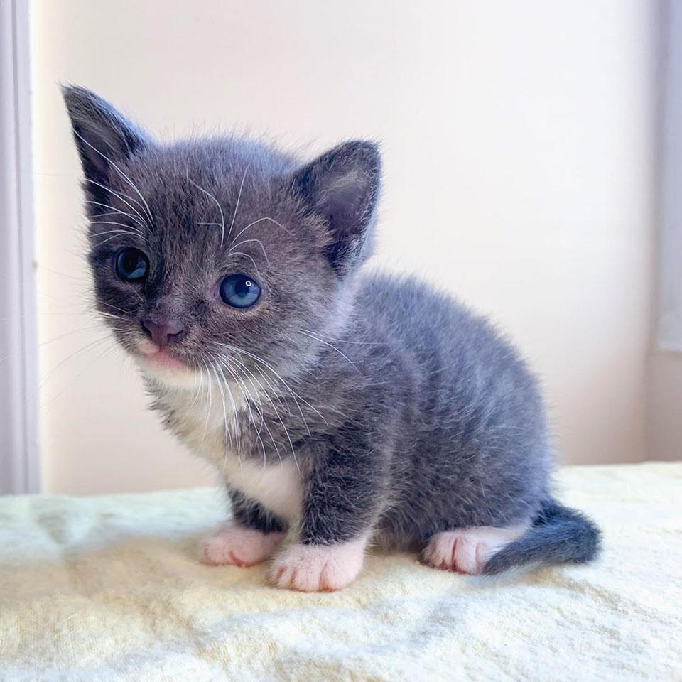Adorable gatito