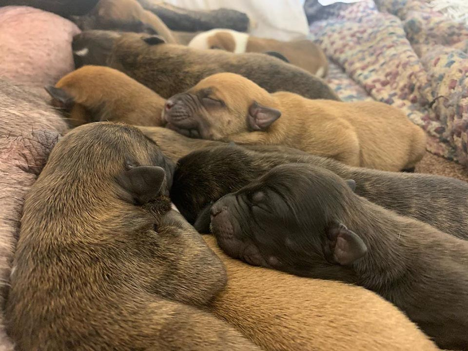 Cachorros durmiendo
