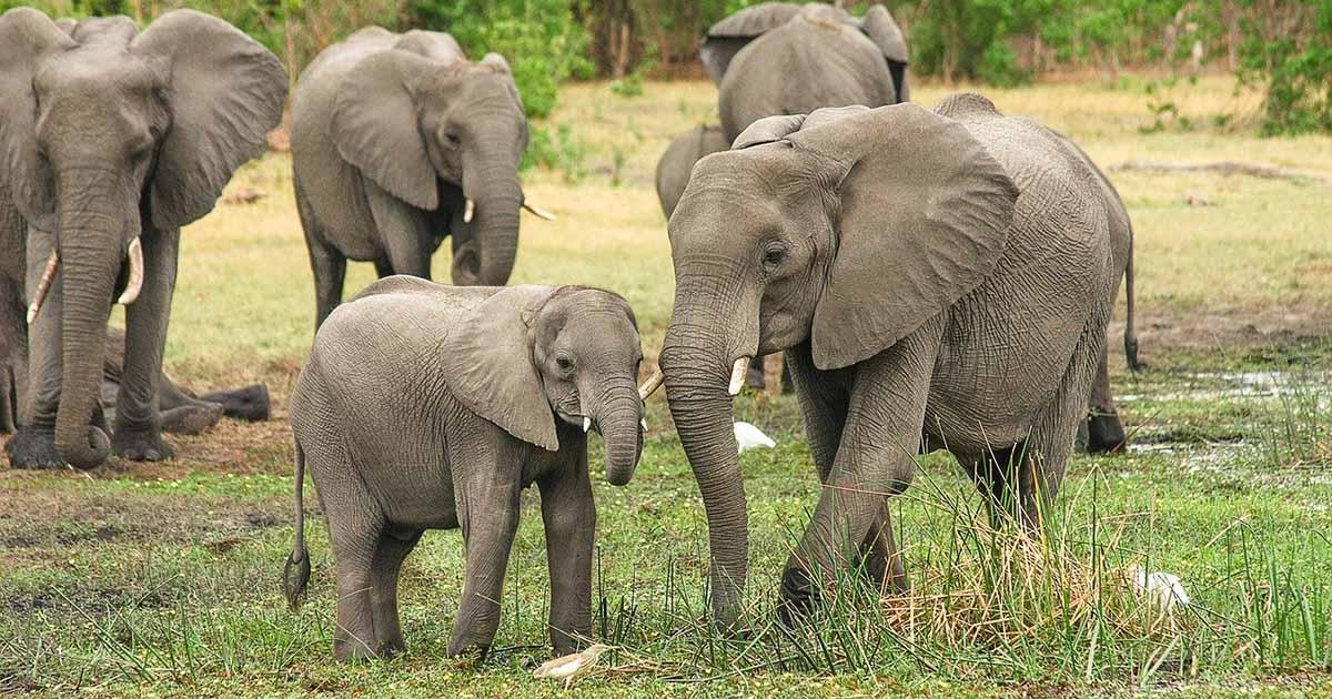 Cazador furtivo elefantes sentenciado prision