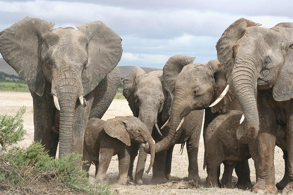 Elefantes Kenia