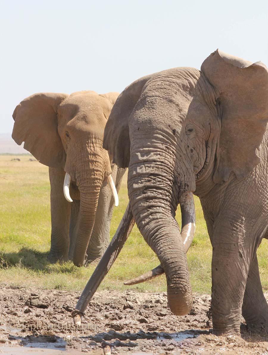 Elefantes barro