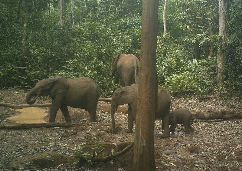 Elefantes contentos