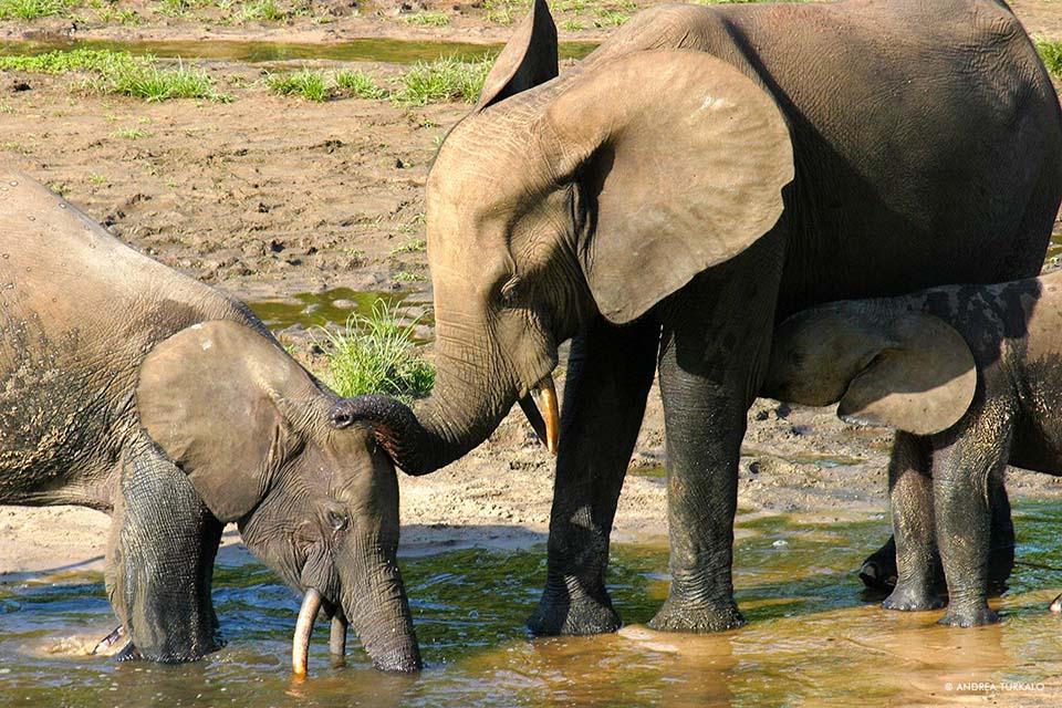 Elefantes disfrutando