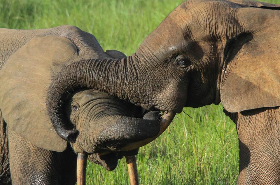 Elefantes en hábitat