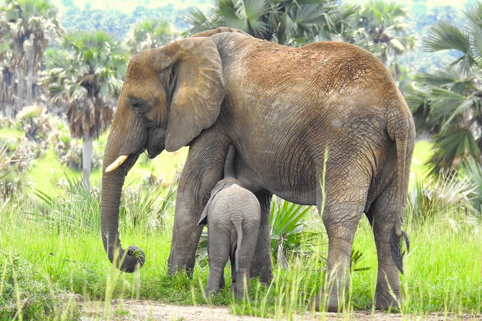 Elefantes en la selva