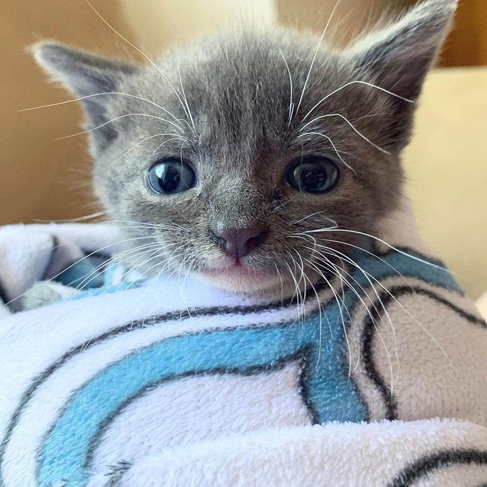 Gatito encontrado