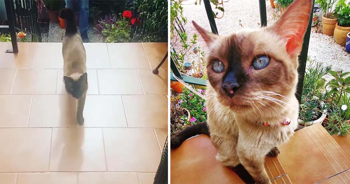 Gato escapa de casa todas las mañanas para visitar a su vecino