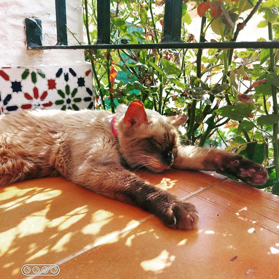 Gato escapa de casa