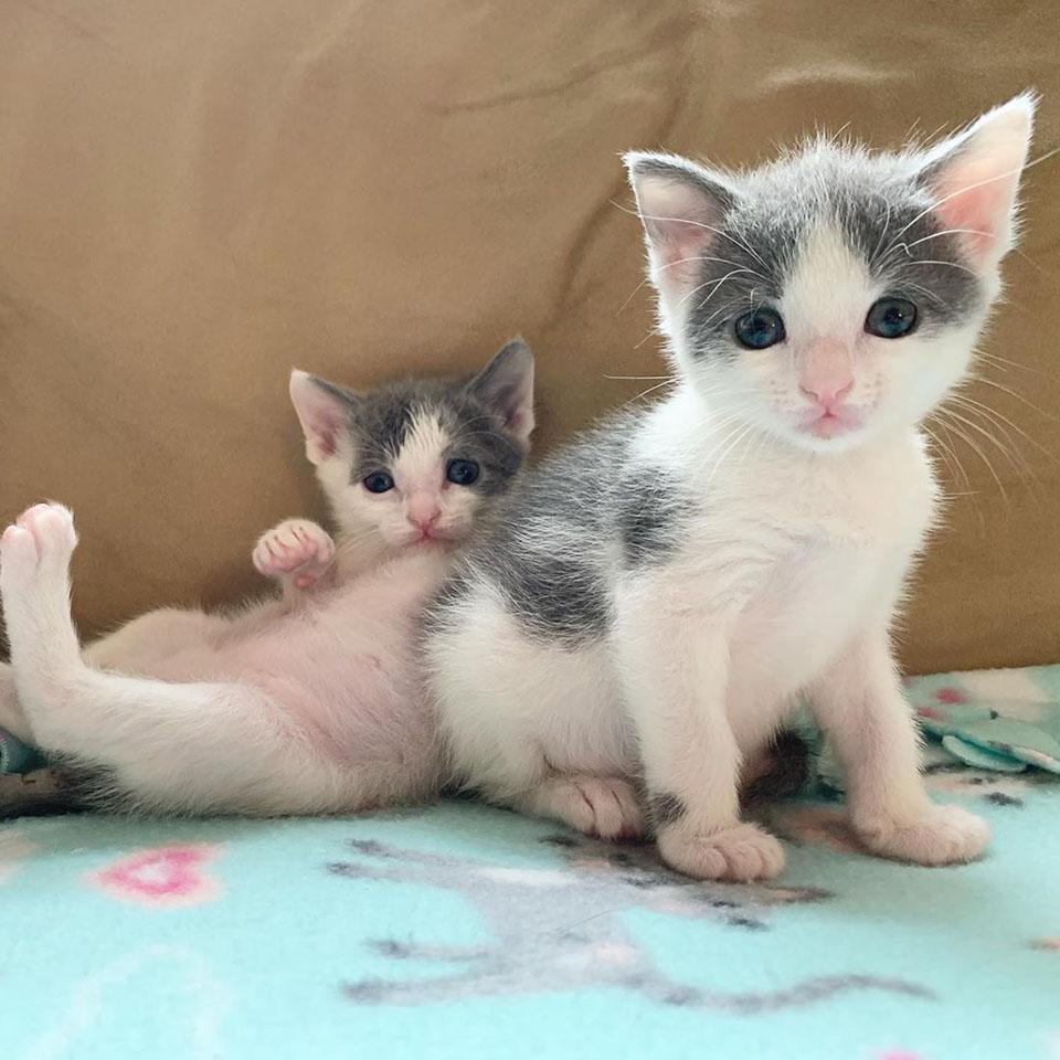 Hermanos felinos