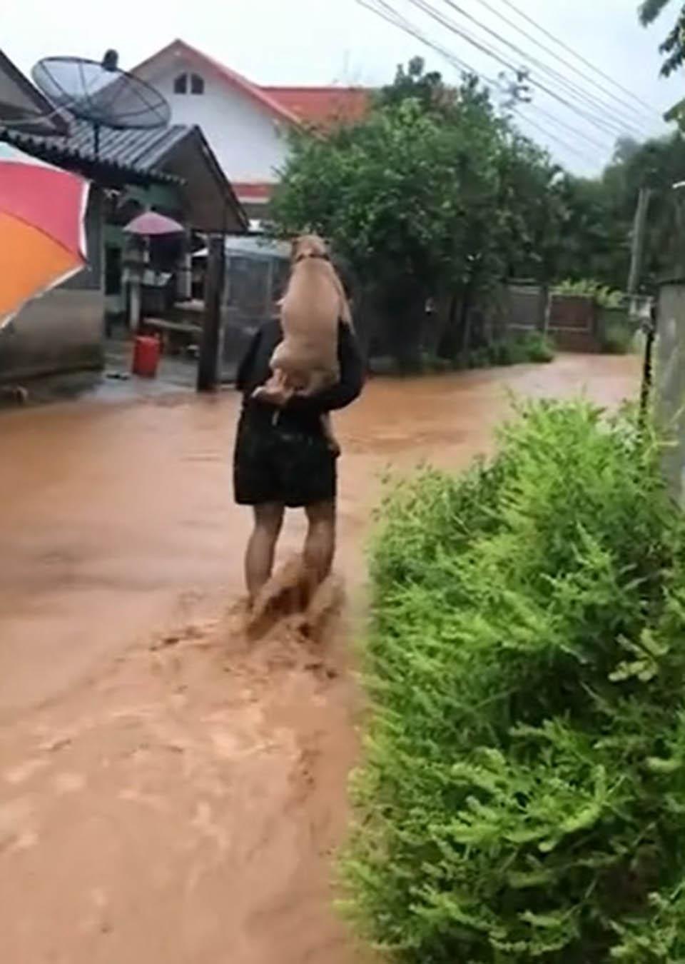 Hombre y perrito en camino inundado