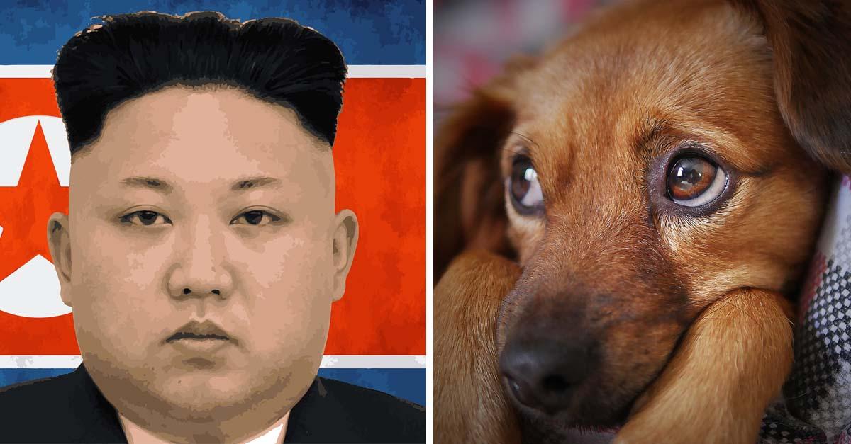 Ordenan a los norcoreanos que entreguen a sus perros como alimento