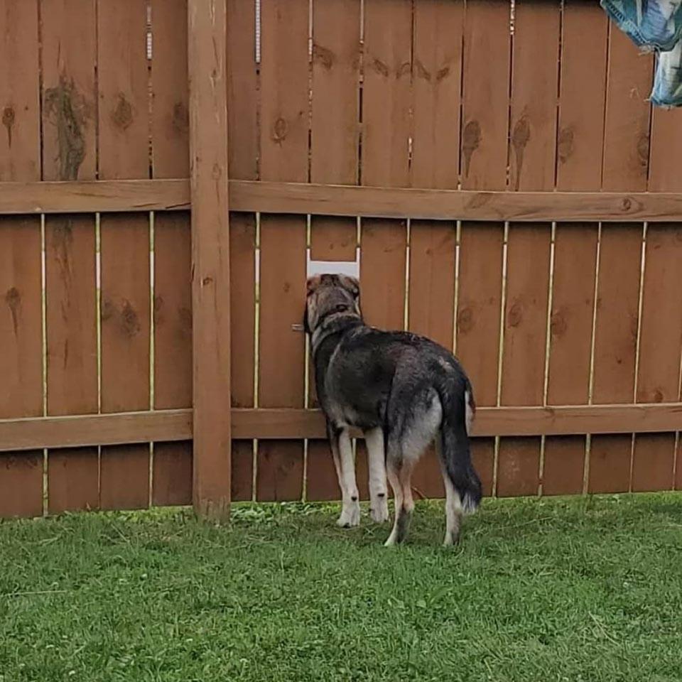 Perrito se asoma por la cerca