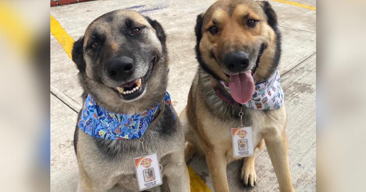 Perritos rescatados adoptados restaurante