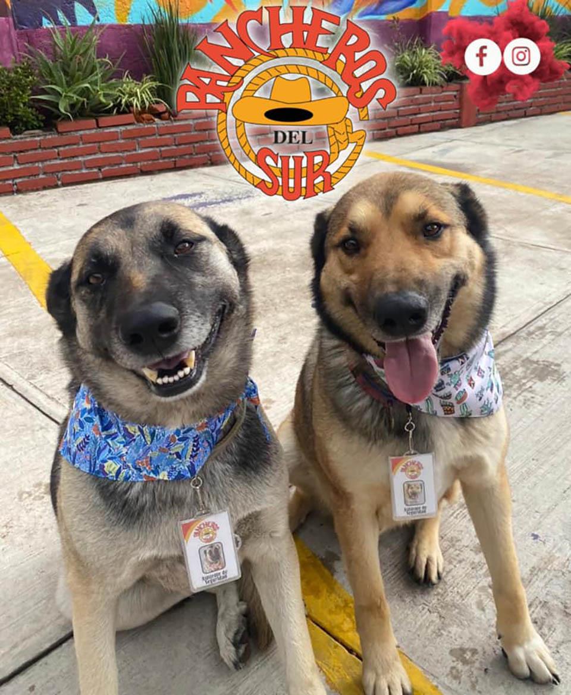 Perritos rescatados son adoptados