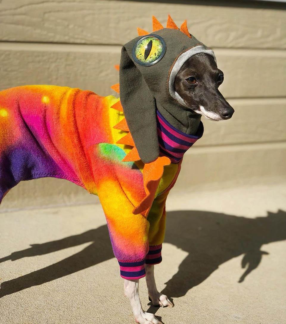 Perro con disfraz