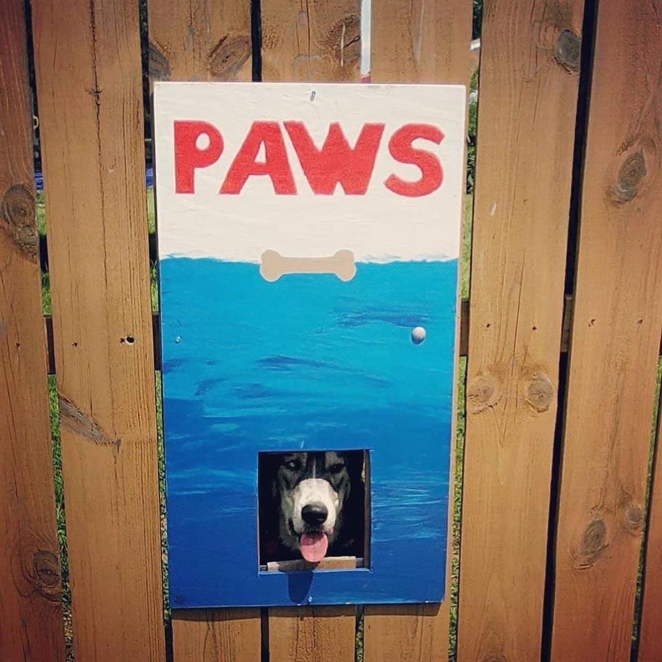 Perro se asoma por pintura paws