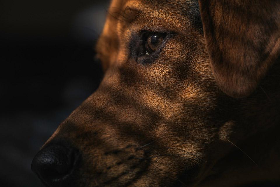 Rostro de perrito