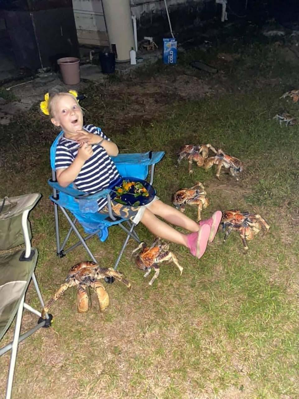 Cangrejos en picnic familiar