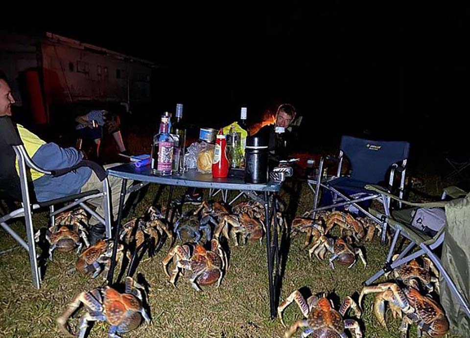 Cangrejos gigantes en picnic