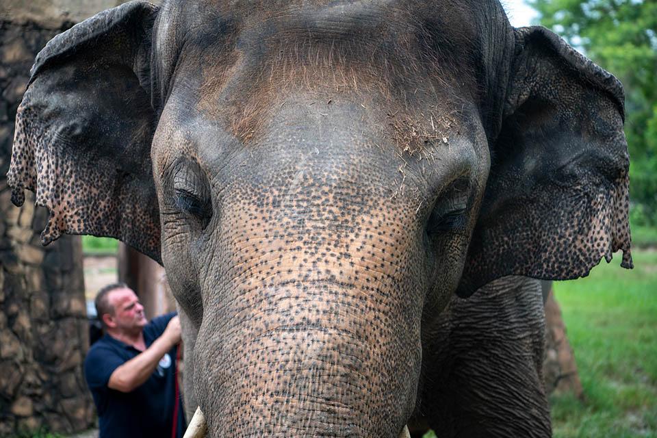 Elefante más solitario del mundo