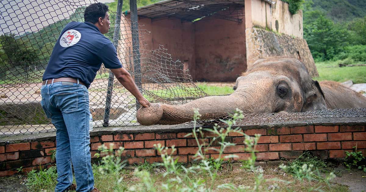 Elefante más solitario mundo liberado 35 años