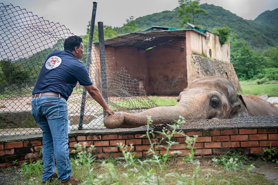 Elefante más solitario