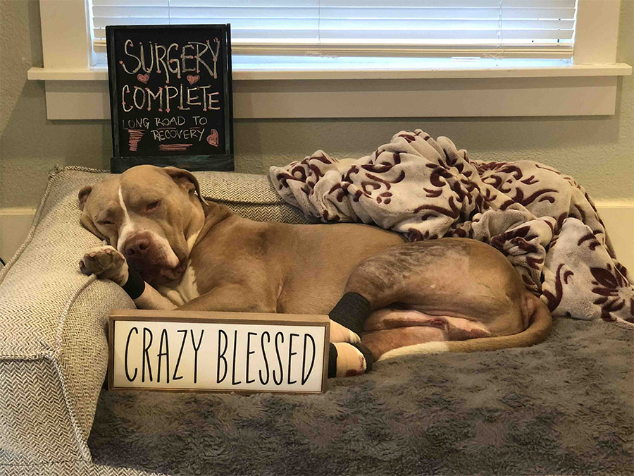 Familia rescata perro abandonado